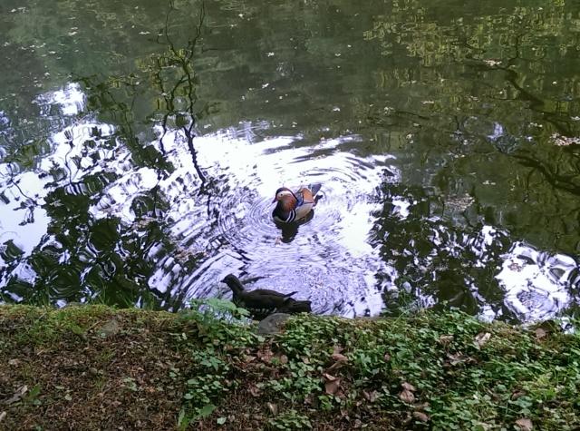 ~two cute little ducks